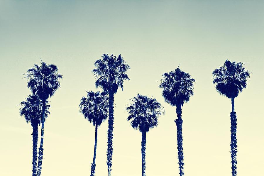 California Photograph - California Palm Trees by Anna Floridia