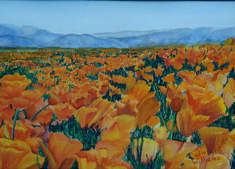 Scenery Painting - California Poppies by Dwight Williams