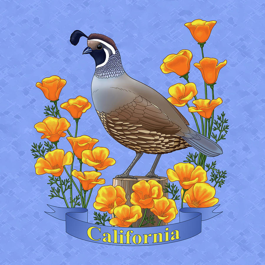California Painting - California Quail And Golden Poppies by Crista Forest
