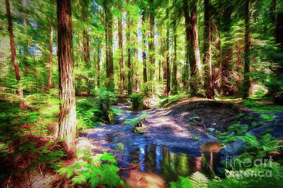 California Painting - California Redwood Forest Wetlands Ap by Dan Carmichael