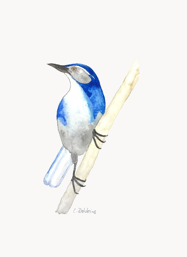 Jay Painting - California Scrub Jay by Christiane Dobbins