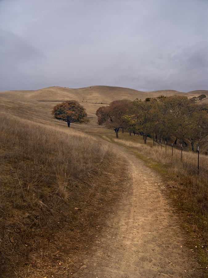 Landscape Photograph - California Winter by Karen  W Meyer