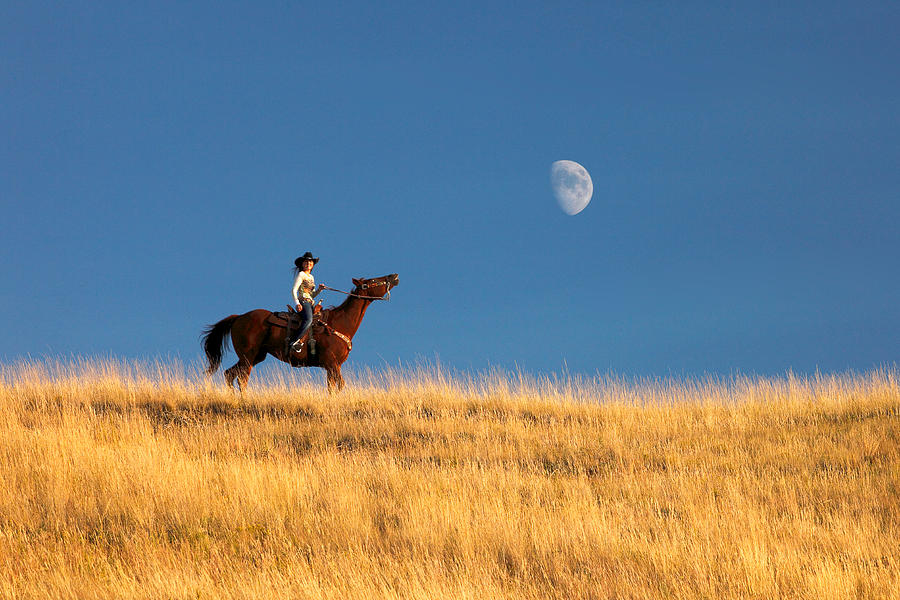 Horse Photograph - Call Of The Moon by Todd Klassy