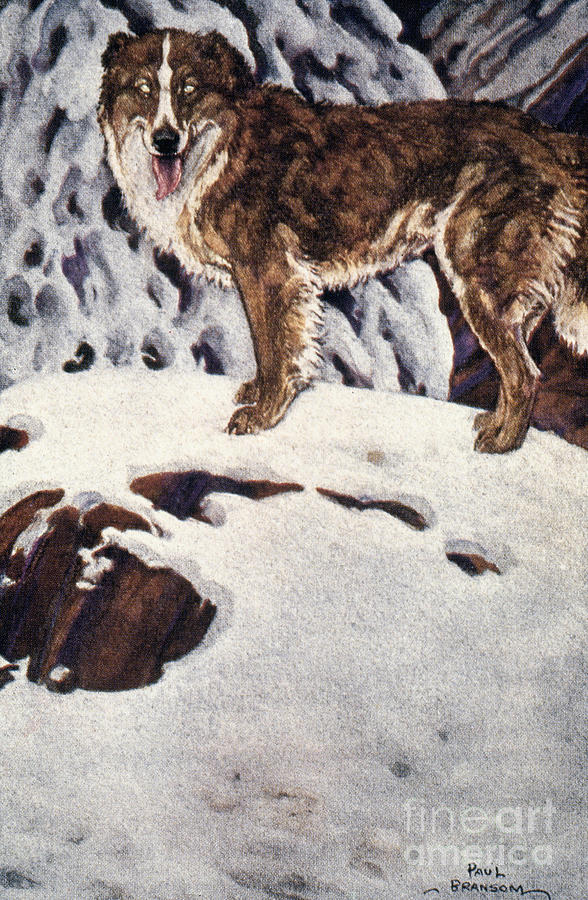 1903 Painting - Call Of The Wild, 1903 by Granger
