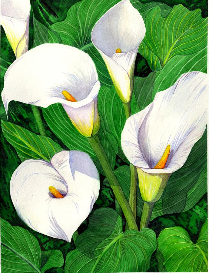 Lily Painting - Calla Lilies by Catherine G McElroy
