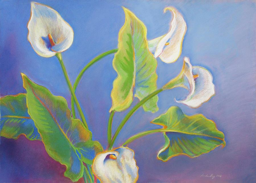 Calla Lilies Drawing - Calla Lilies by Linda Ruiz-Lozito