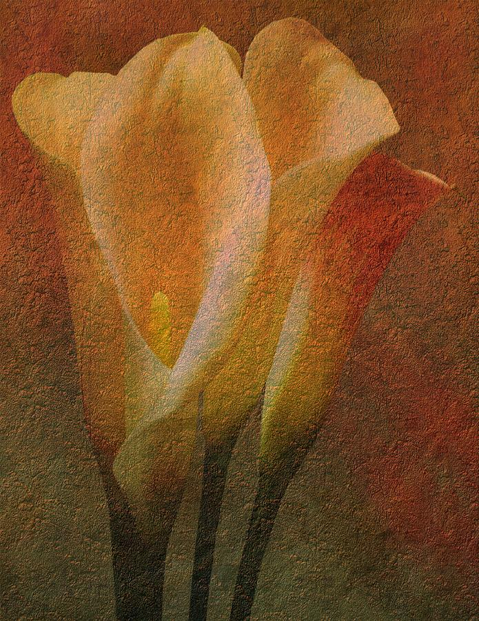 Lily Digital Art - Calla Lilies by Michael and Diane Duhaime