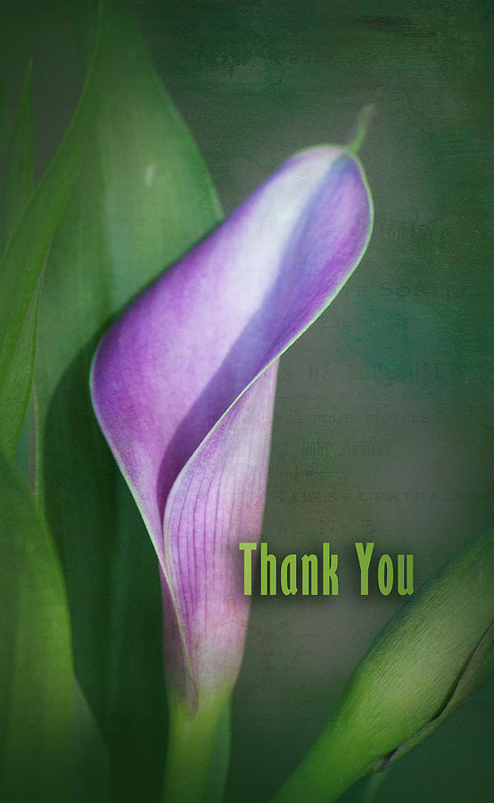 Calla Lilly Thank You by Karen Kuykendall