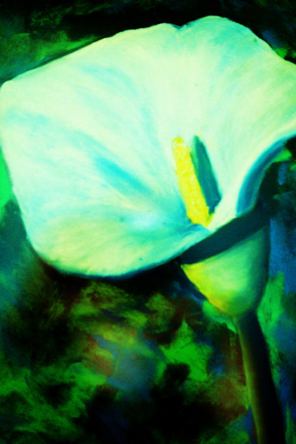 Flower Painting - Calla Lily by Melinda Etzold