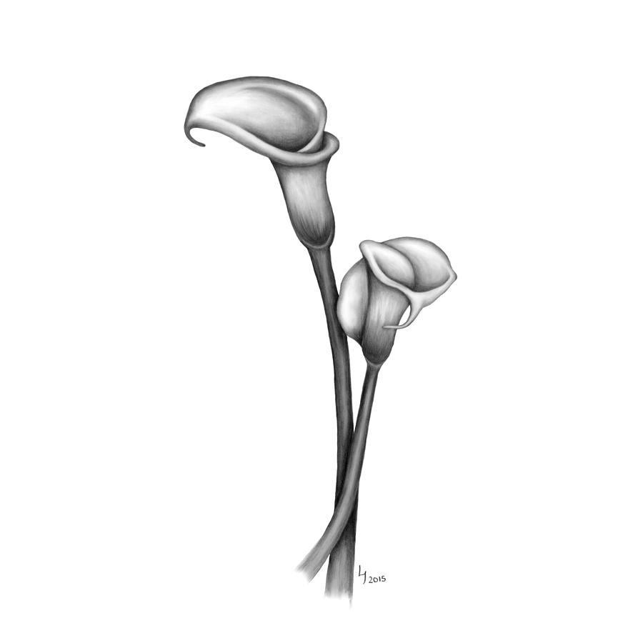 flower drawing calla lily pair by laura teti