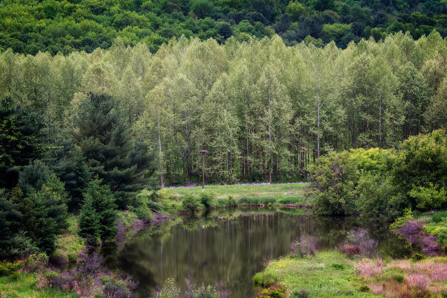 Forest Photograph - Calm by Guy Whiteley