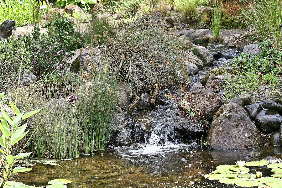 Pond Photograph - Calming Pond by Liz Santie