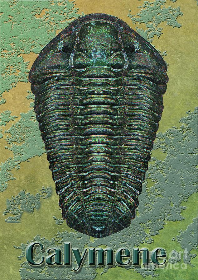 Trilobite Photograph - Calymene Niagarensis by Melissa A Benson