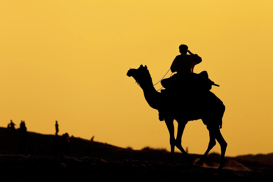 Camel at Jaisalmer, India by Mahesh Balasubramanian