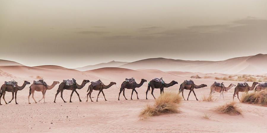 Camel Caravan by Rich Isaacman