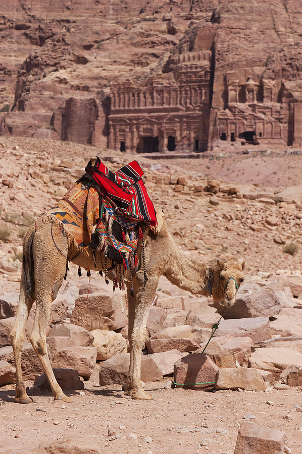 Vertical Photograph - Camel In Front Of The Royal Tombs In Petra by Martin Child