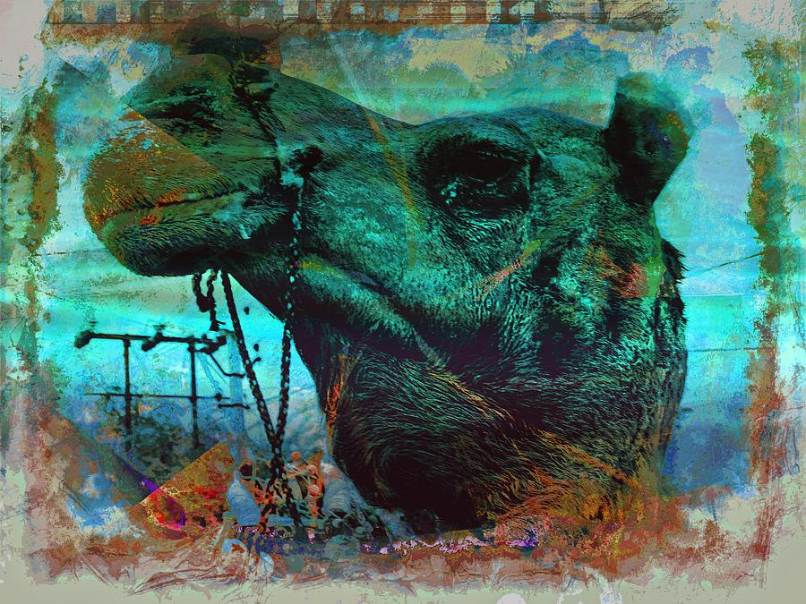 Camel Portrait Desert India Jaisalmer 7a by Sue Jacobi