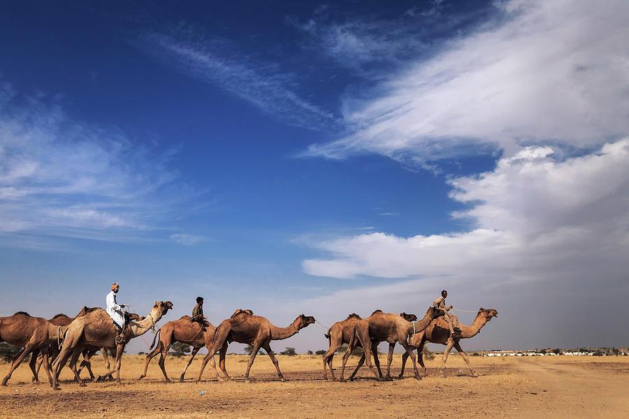Camel Raiders, Jaisalmer, India by Mahesh Balasubramanian