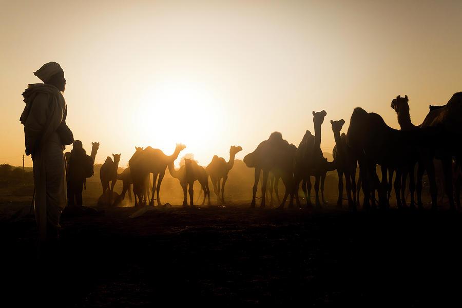 Camels at Pushkar during Sunset by Mahesh Balasubramanian