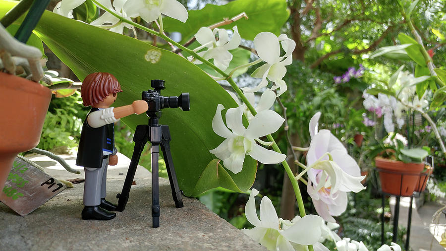 Camera Photograph - Camera People Come In All Sizes by Liza Eckardt