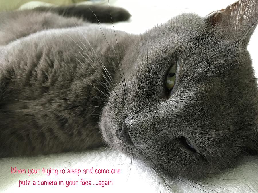 Cat Photograph - Resting Face by Debbie Cundy