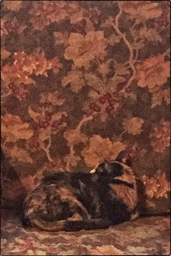Camo Cat by Pamela Showalter