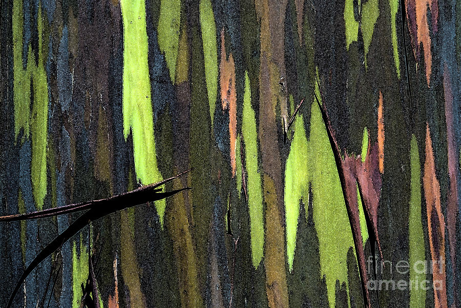 Abstract Photograph - Camouflage by Carl Ellis