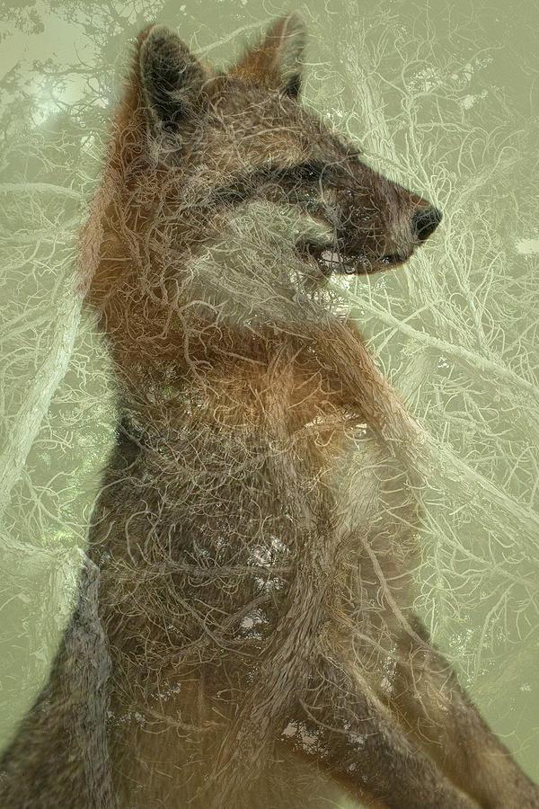 Fox Digital Art - Camouflage Fox by Annie Omens