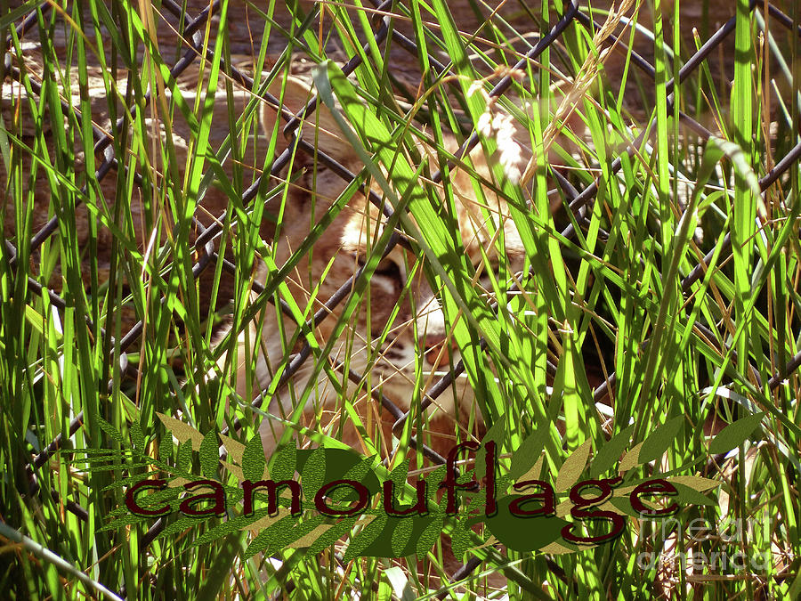 Camouflage Photograph - Camouflage by Methune Hively