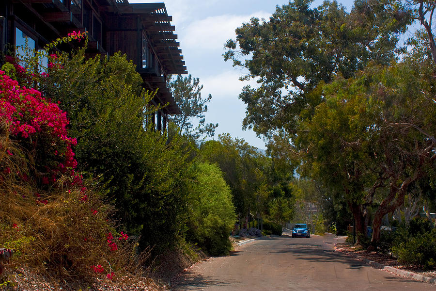Ucsd Photograph - Campus Road by Q J