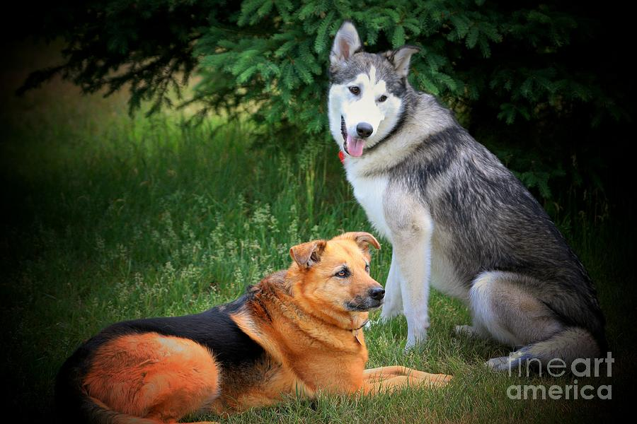 Dog Photograph - Can We Play Now by Marjorie Imbeau