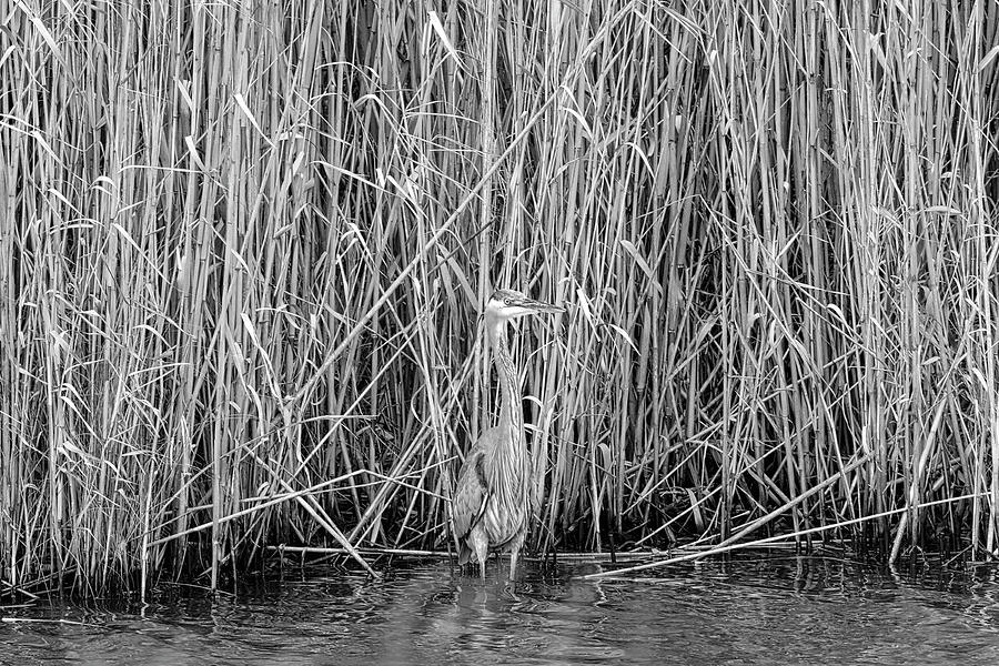 Bird Photograph - Can You See Me? by Lindy Pollard