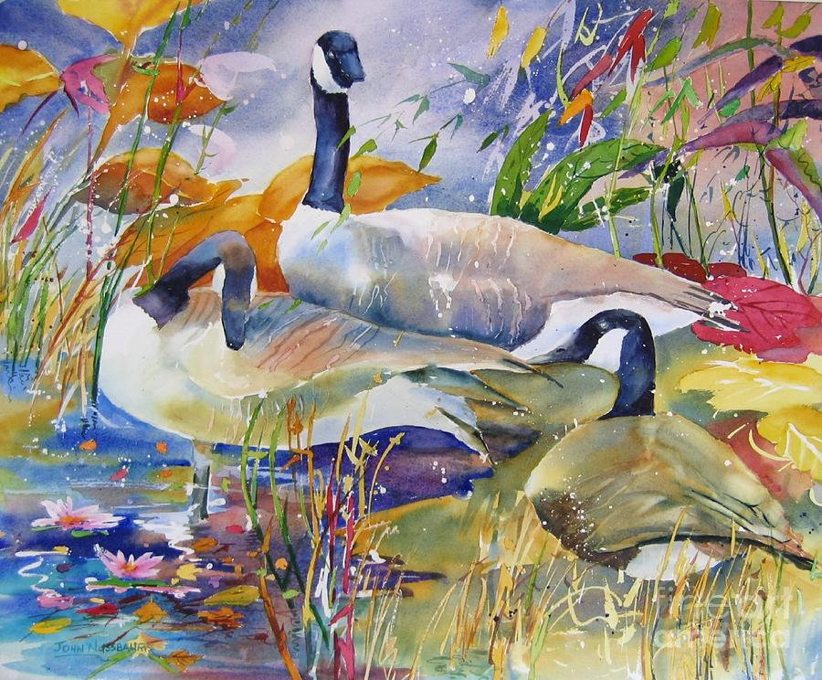 Watercolours Painting - Canada Geese by John Nussbaum