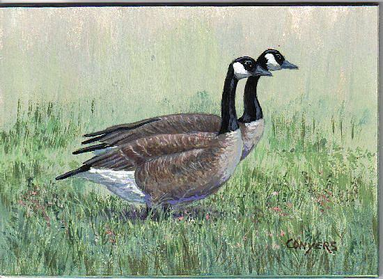 Goose Painting - Canada Geese pair by Peggy Conyers