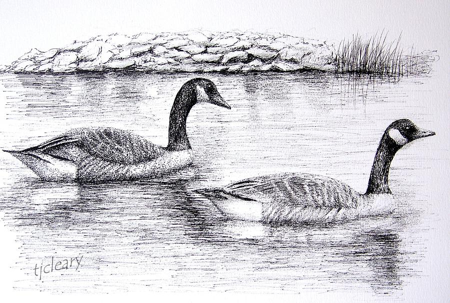 Geese Drawing - Canada Geese by Terence John Cleary