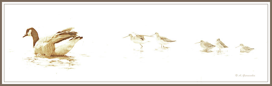 Canada Goose Digital Art - Canada Goose And Sandpipers In Salt Marsh by A Gurmankin