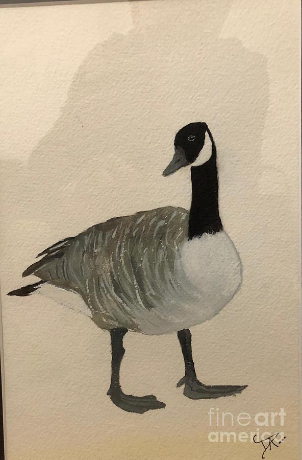 Canada Goose by Donald Paczynski