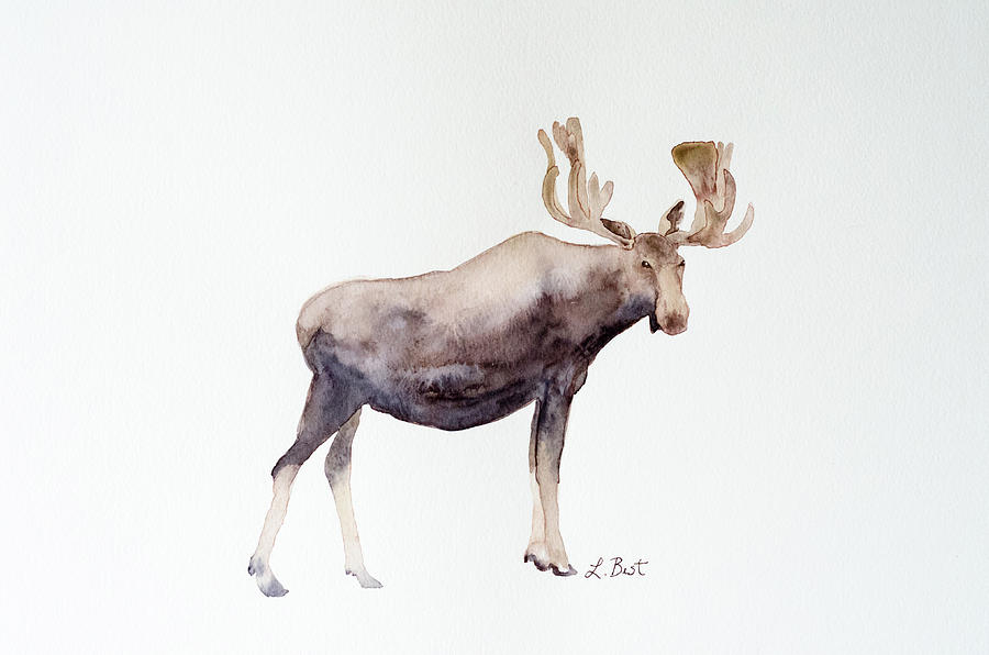 Canada Moose by Laurel Best
