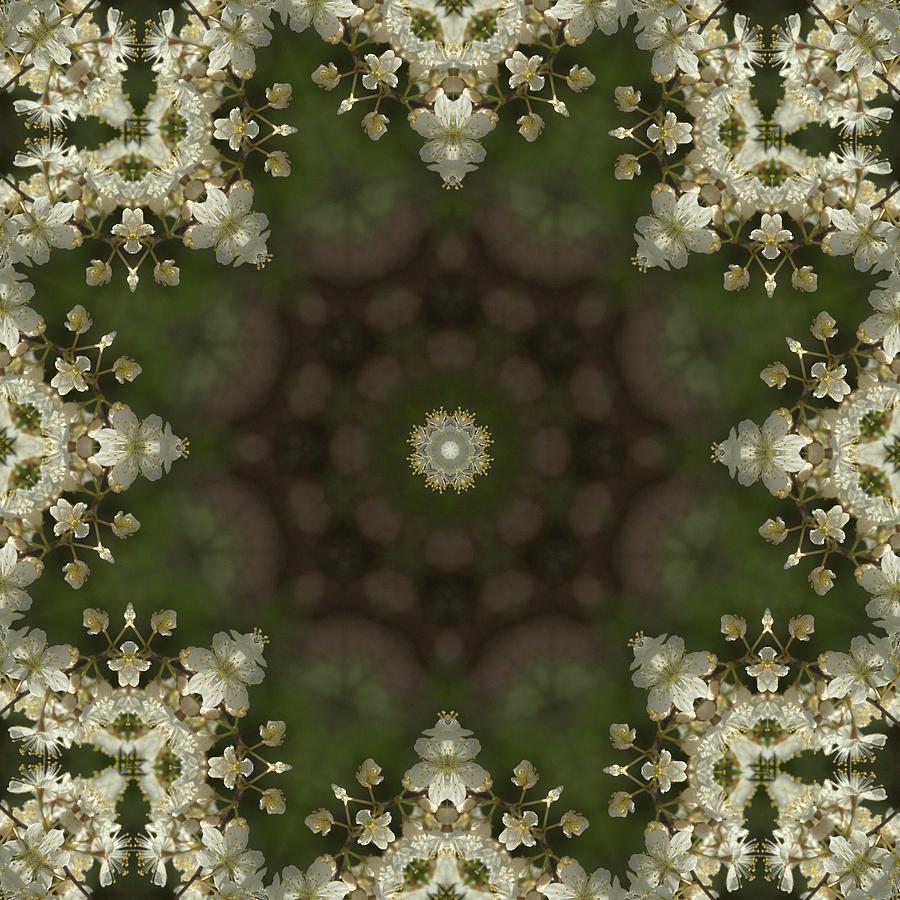 Canada Plum Kaleidoscope 2 by Valerie Kirkwood