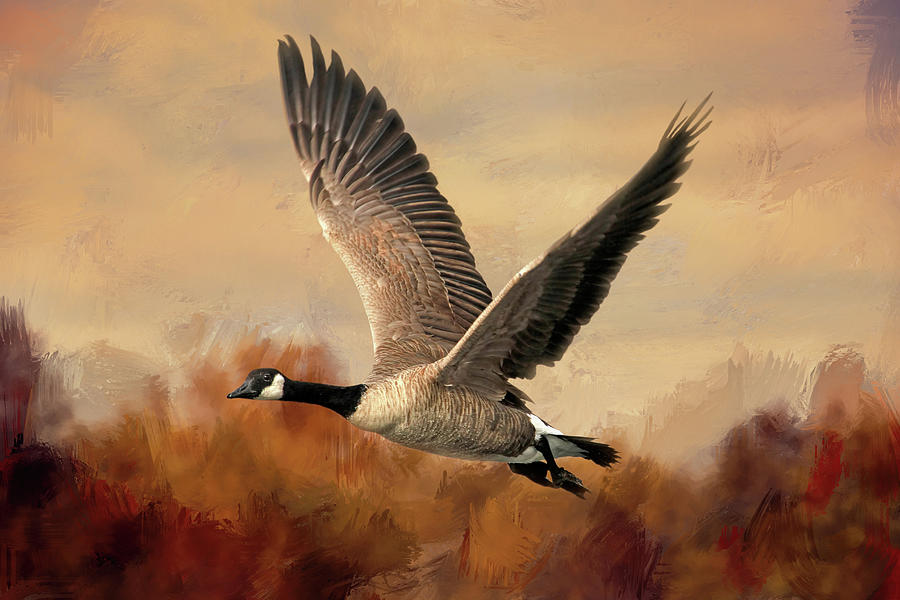 Canada Goose Photograph - Canada Air by Donna Kennedy