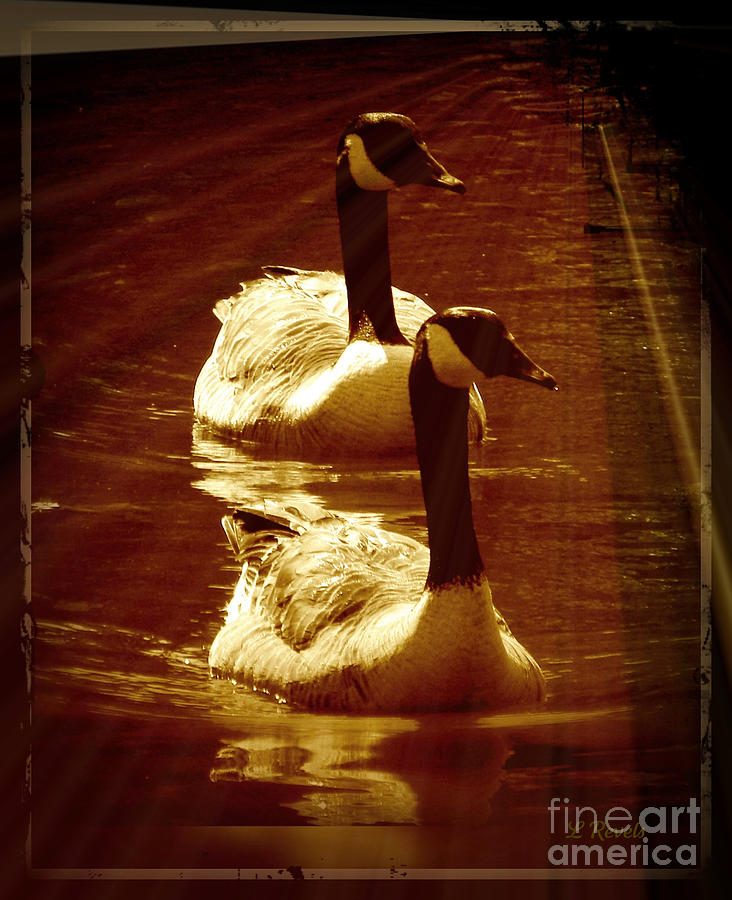 Bird Photograph - Canadian Gees by Leslie Revels