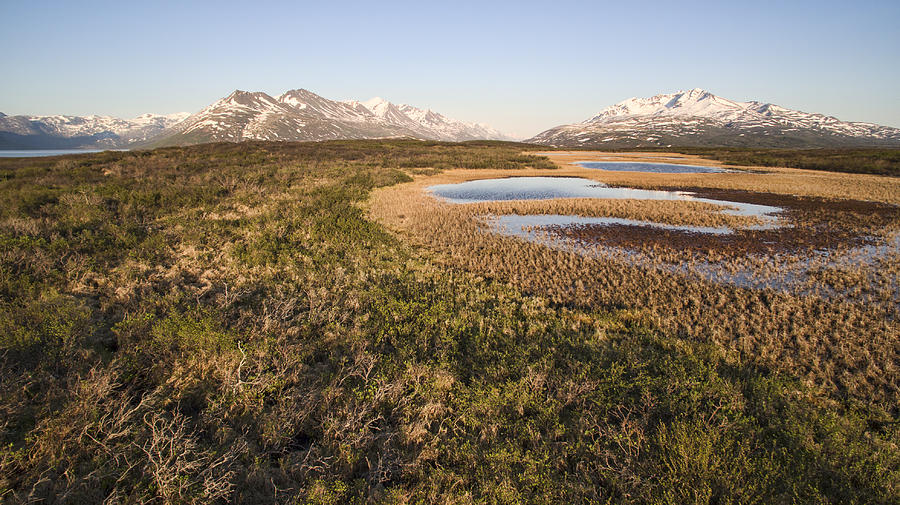 British Columbia Photograph - Canadian Tundra In Evening Light. by Michele Cornelius