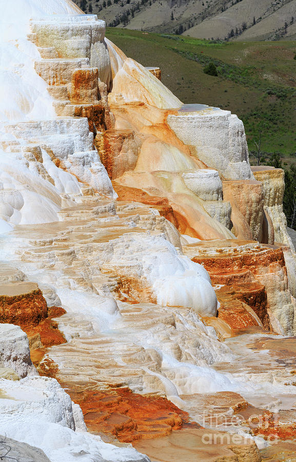 Algae Photograph - Canary Spring Mammoth Hot Springs Upper Terraces by Louise Heusinkveld