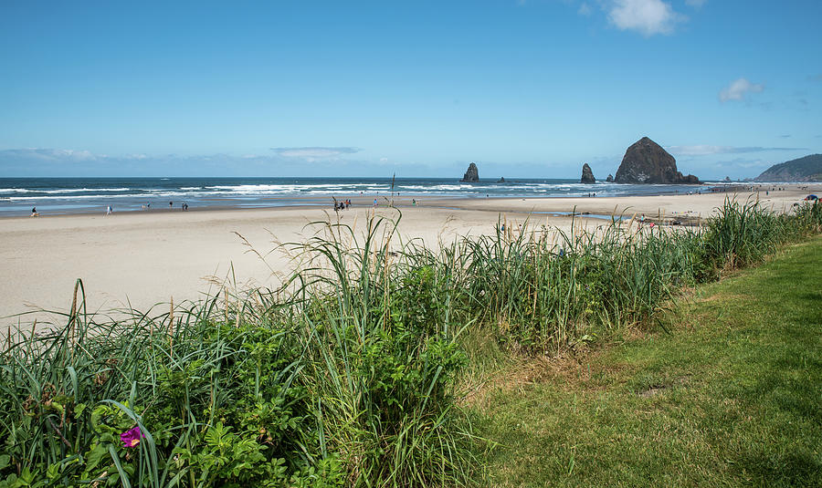 Cannon Beach Photograph - Cannon Beach And Purple Bloom by Tom Cochran
