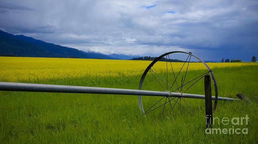 Canola Photograph - Canola by Idaho Scenic Images Linda Lantzy