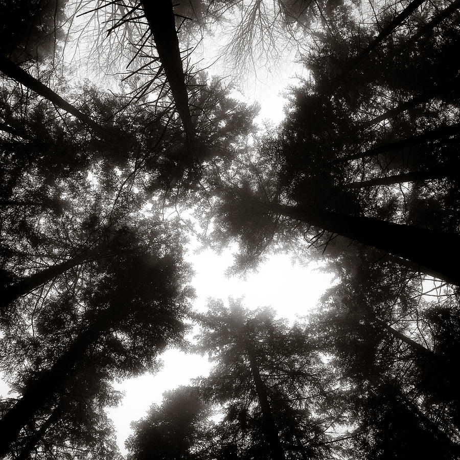 Trees Photograph - Canopy by Dave Bowman