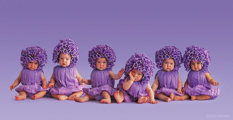 Purple Photograph - Cantebury Bells by Anne Geddes