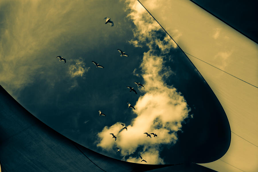 Abstract Photograph - Canvas Seagulls by Bob Orsillo