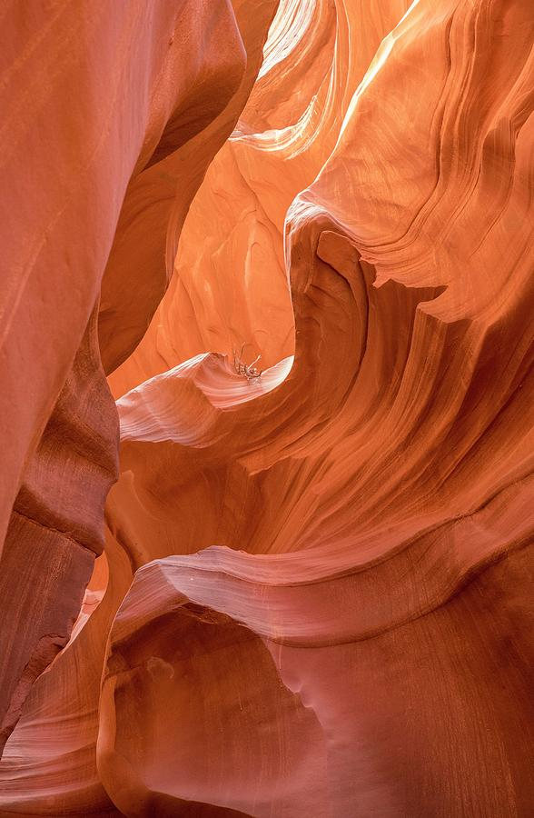 Canyon Beauty  by Jeanne May