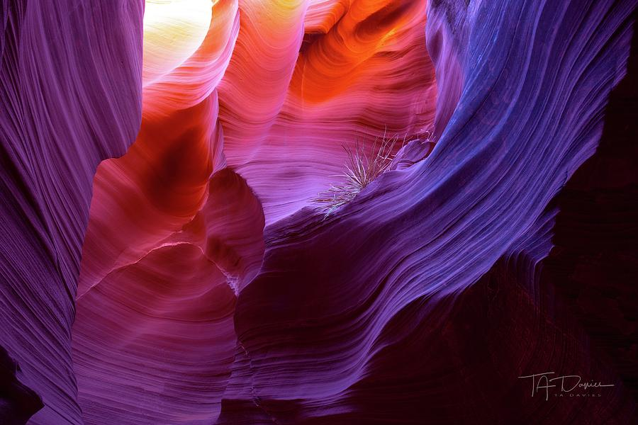 Canyon Color by T A Davies